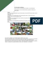 Actividades Productivas de Guatemala
