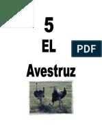 Leccion5Avestruz