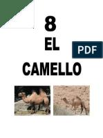Leccion8CAMELLO