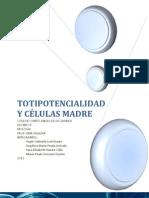 TOTIPOTENCIALIDAD_Y_CÉLULAS_MADRE_(1) (1)