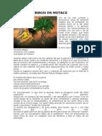 Cuentos y Leyendas Del Oriente Boliviano