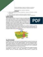 plasmólisis y turgencia en eritrocitos