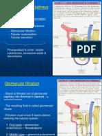 Urinary System2