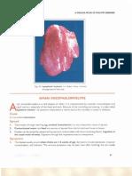 Atlas of Poultry Disease 2