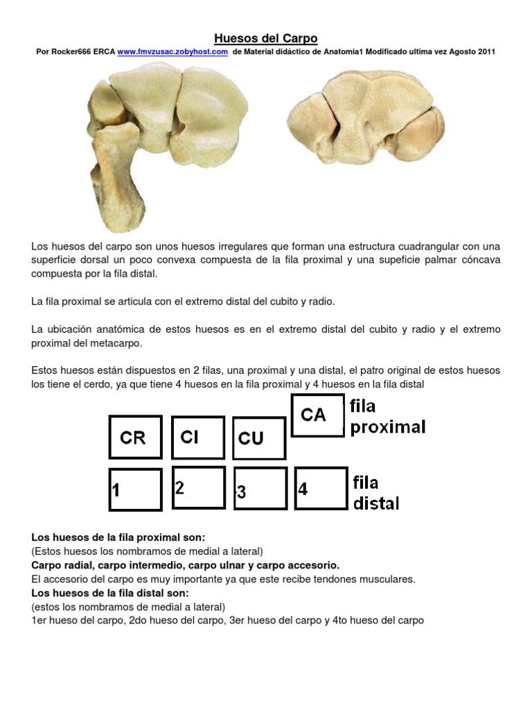 11. Huesos Del Carpo
