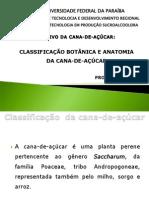 5botnicaemorfologiadacana-110930222100-phpapp02