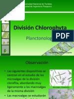 clorofitas