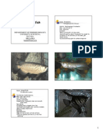 KOLITHA-ORNA FISH