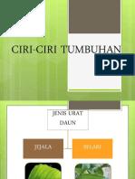 Ciri-ciri tumbuhan DST Tahun 3
