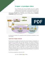Ciclo del Nitrógeno un paradigma clasico