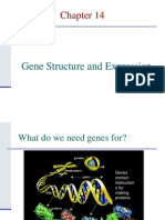 Chapter 16 - Gene Structure and Expression