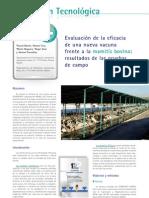 cys_25_28-30 Evaluación de la eficacia de una nueva vacuna frente a la mamitis bovina