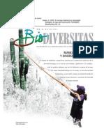 pitaya-antecedentes