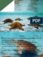 Hemijska i Fizicka Svojstva Morske Vode