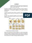 Meiosis (1).docx