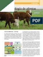 INTA VyE NRO27 Ecofisiologia de Plantas Forrajeras
