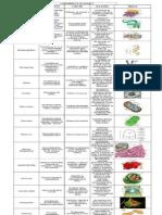 ADN - proteínas