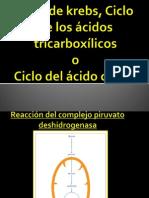 Ciclo de krebs, Ciclo de los ácidos