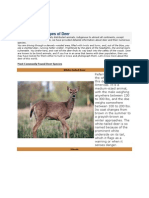 List of Different Types of Deer