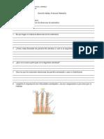 guadetrabajonutricinoctavo-121105040227-phpapp02