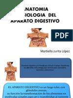 Aparato_digestivo Mandar