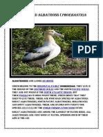 Short-Tailed Albatross (Phoebastria Albatrus
