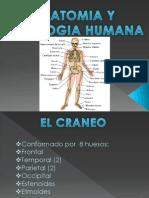 Anatomia Humana 2