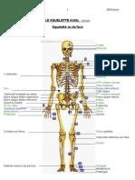 3 Ostéo squelette axial