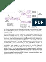 Ciclo de vida de los Virus.docx