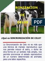 Sincronizacion y Poliovulacion