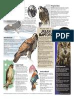 A look at birds of prey