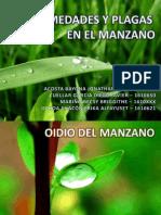 Enfermedades y Plagas en El Manzano