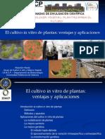 Tecnicas de cultivo in vitro de plantas