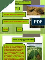 Diapositivas Plantas en Extincion