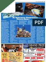 Color Newspaper Page Design