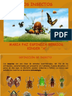 presentacion-insectos