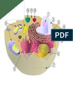 Desenho de uma célula