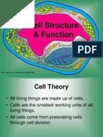 cells 7th grade