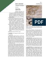 Hunt (2006)-Anniella pulchra.pdf