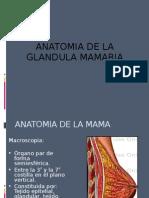 Anatomia de La Mama
