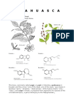 Another Master of plants´ ayahuasca study