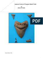 A Key to Fossil Shark Teeth