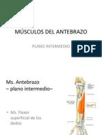 Anatomia Ms. Antebrazo Terminado