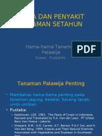 HAMA DAN PENYAKIT TANAMAN SETAHUN palawija01