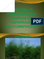 enfermedades fungicas