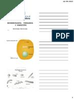 Clase+3+Morfología+bacteriana