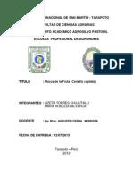 ceratitis capitata.docx