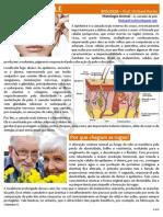 À FLOR DA PELE - Histologia Animal - As Camadas da Pele (Estudo Dirigido)