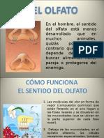 EL OLFATO1
