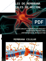 potencialesdemembranaypotencialesdeacion-120101124236-phpapp02